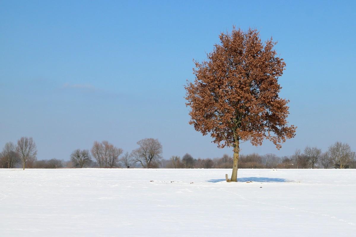 отклонение картинка дерево зимой без снега существования