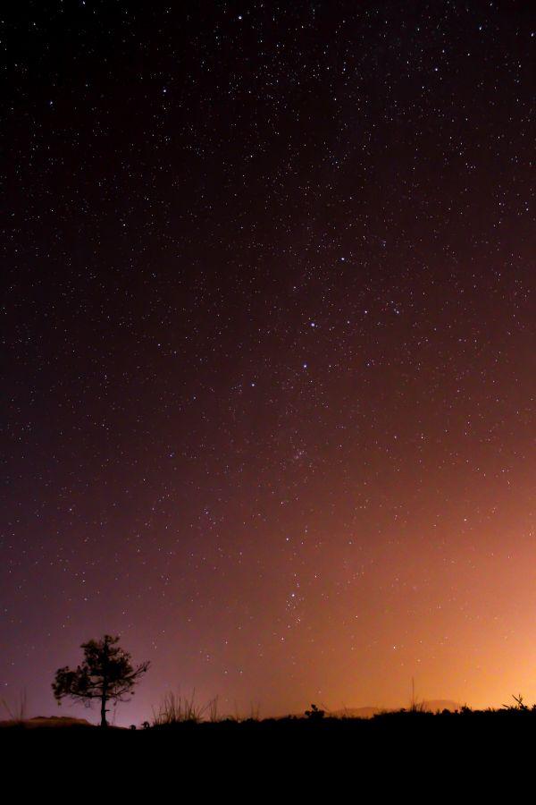 tree,sky,silhouette,night,star,atmosphere