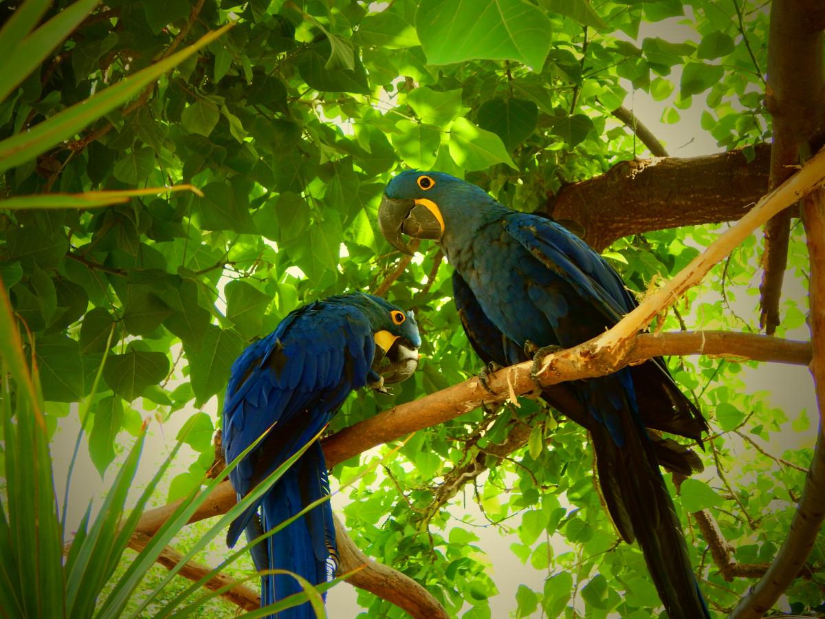 Our Menu  Blue Parrot Oceanfront Cafe