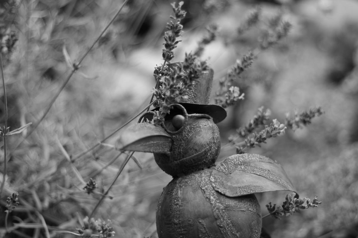 Deco Noir Et Blanc free images : nature, outdoor, branch, winter, bird, black