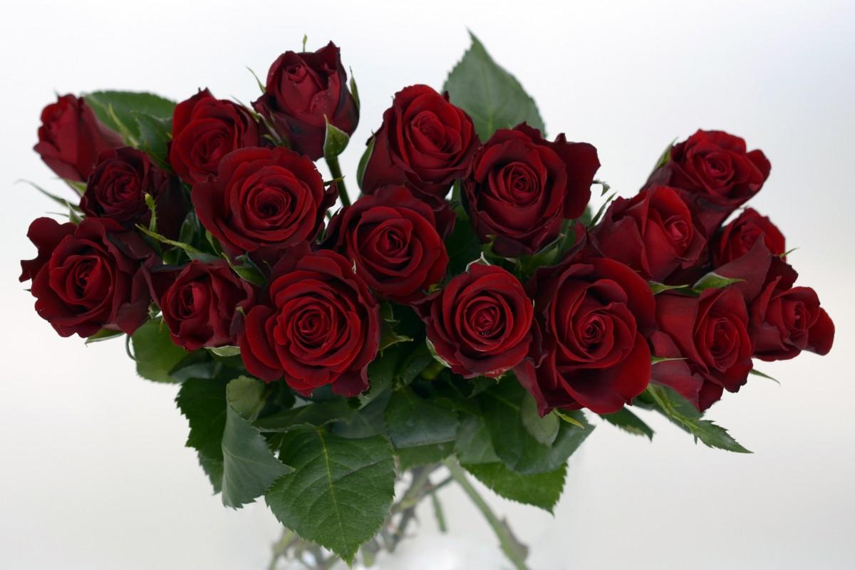 Поздравления, открытка бордовые розы