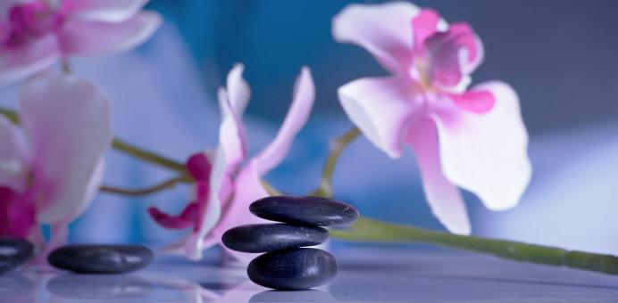 blossom,plant,flower,purple,petal,relax