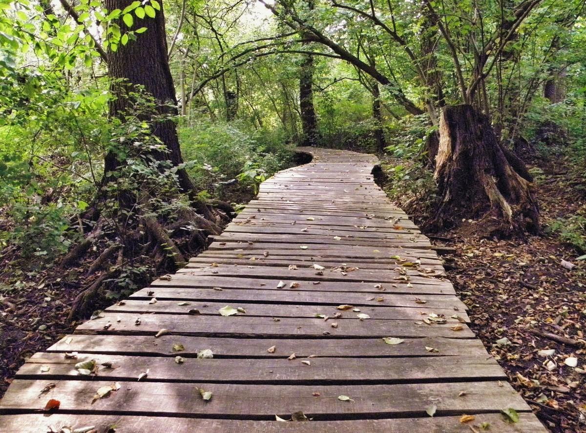 Free fotobanka krajina strom les stezka most list