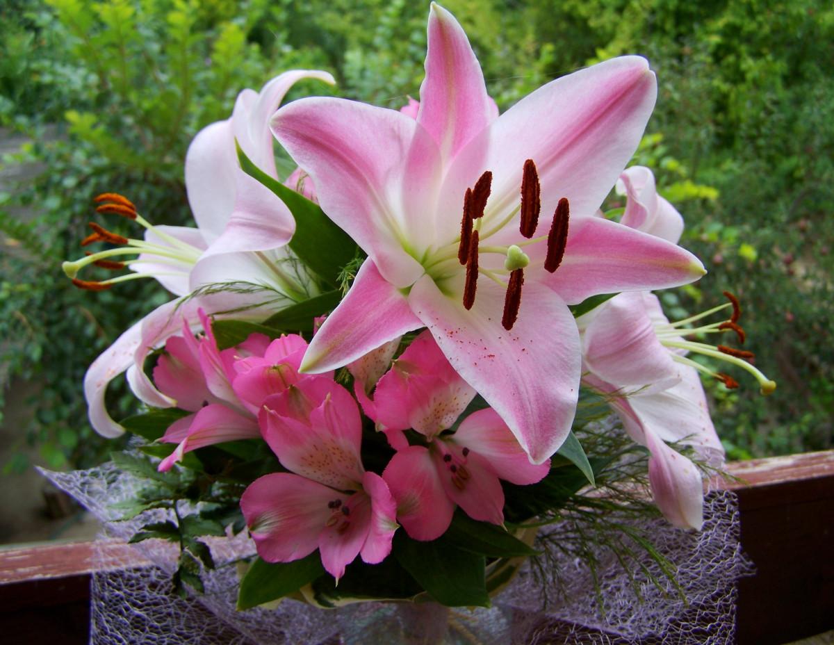 раздумывая лилии картинки розовые розы целующейся