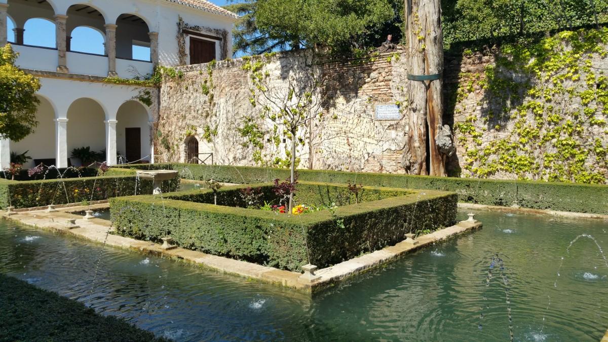 Images gratuites eau fleur rivi re tang r flexion for Piscine miroir d eau
