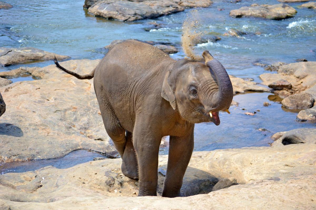 Free Images  Wildlife, Mammal, Fauna, Sri Lanka, Ceylon -6739