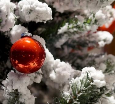 Darmowe Zdjęcia : drzewo, gałąź, wakacje, dziecko, Boże ...