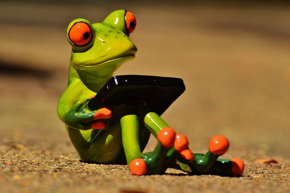 Красивые лягушки открытки