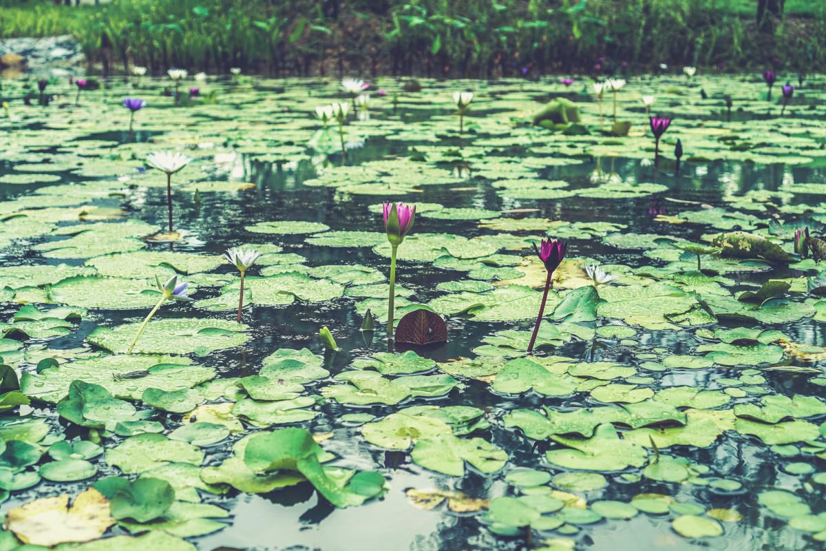 терпенье любовь, картинки в болотном цвете место именно