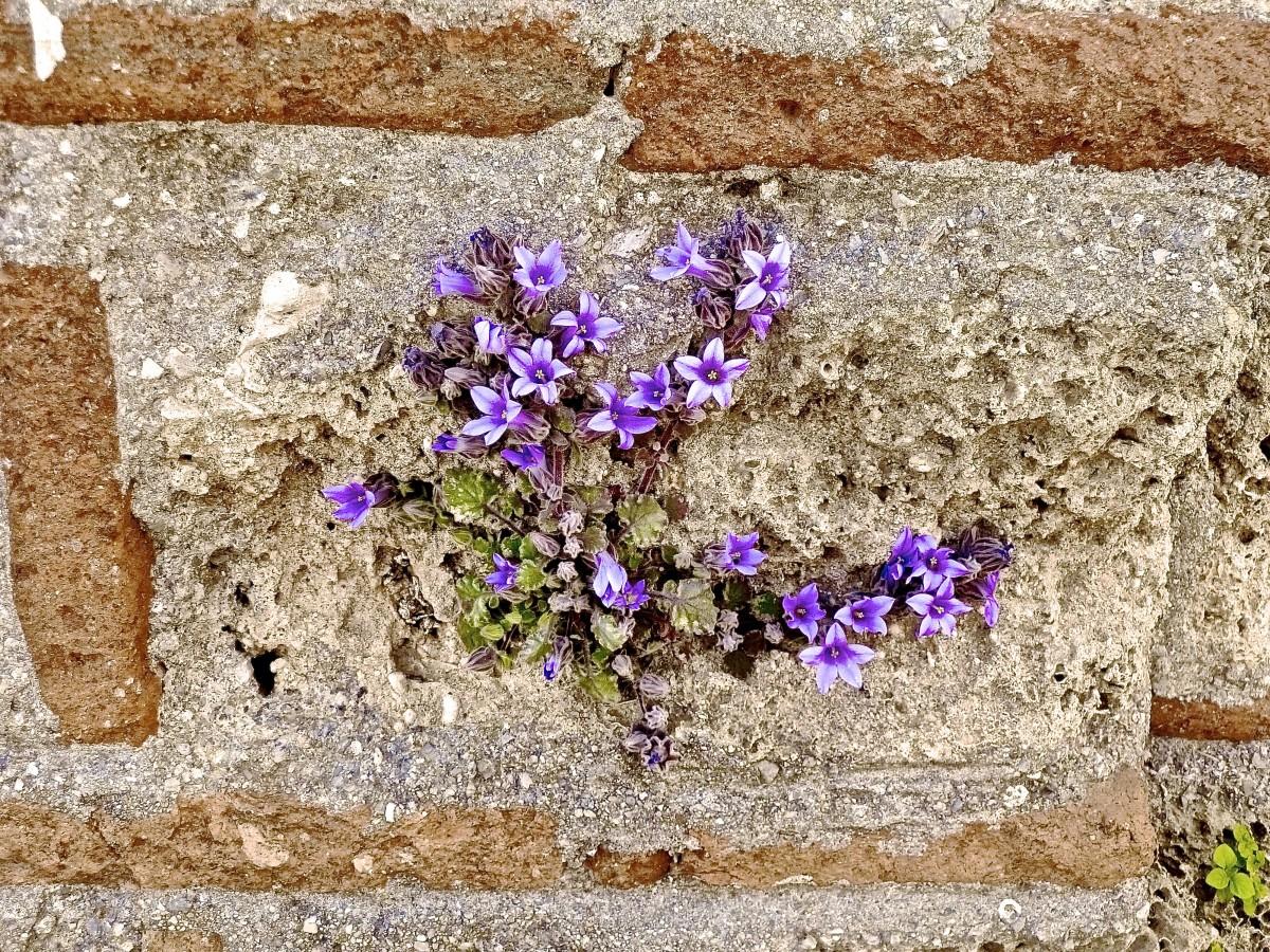 того, насколько картинки каменного цветочками скульптура создана подлинным