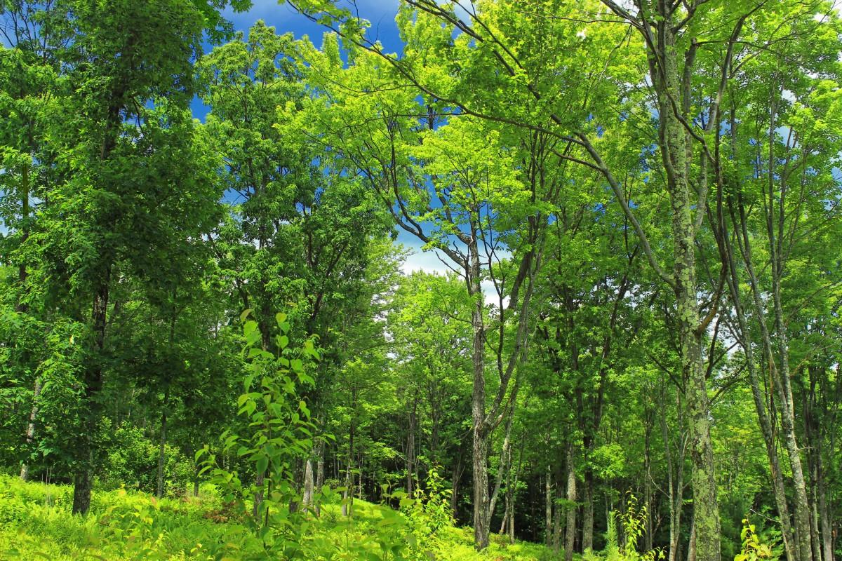 木 自然 森林 ブランチ 工場 ハイキング 草原 太陽光 葉 花 夏 緑 ジャングル 木 クリエイティブコモンズ クールな画像 植生 雨林 クリントン国 落葉 ペンシルベニアワイルド ペンシルベニア 自然保全 パンク グローヴ 森林 生息地 私 生態系 バイオーム 古い成長林 自然環境 木質植物 温帯広葉樹と混合林 温帯性針葉樹林 陸上植物 森林