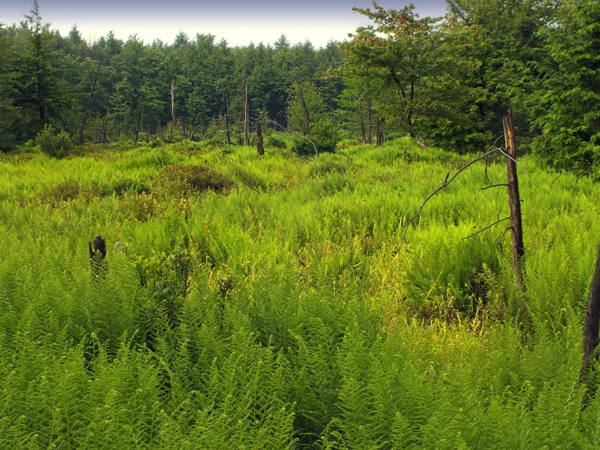 images gratuites arbre for t herbe r gion sauvage oiseau piste prairie fleur faune. Black Bedroom Furniture Sets. Home Design Ideas