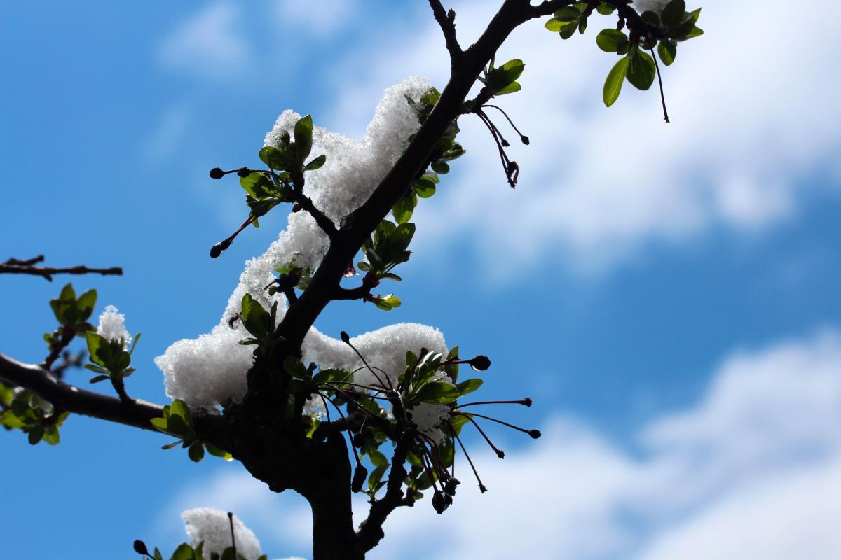 [Image: branch_snow_tree_white_cold_sky_landscap...8231.jpg!d]