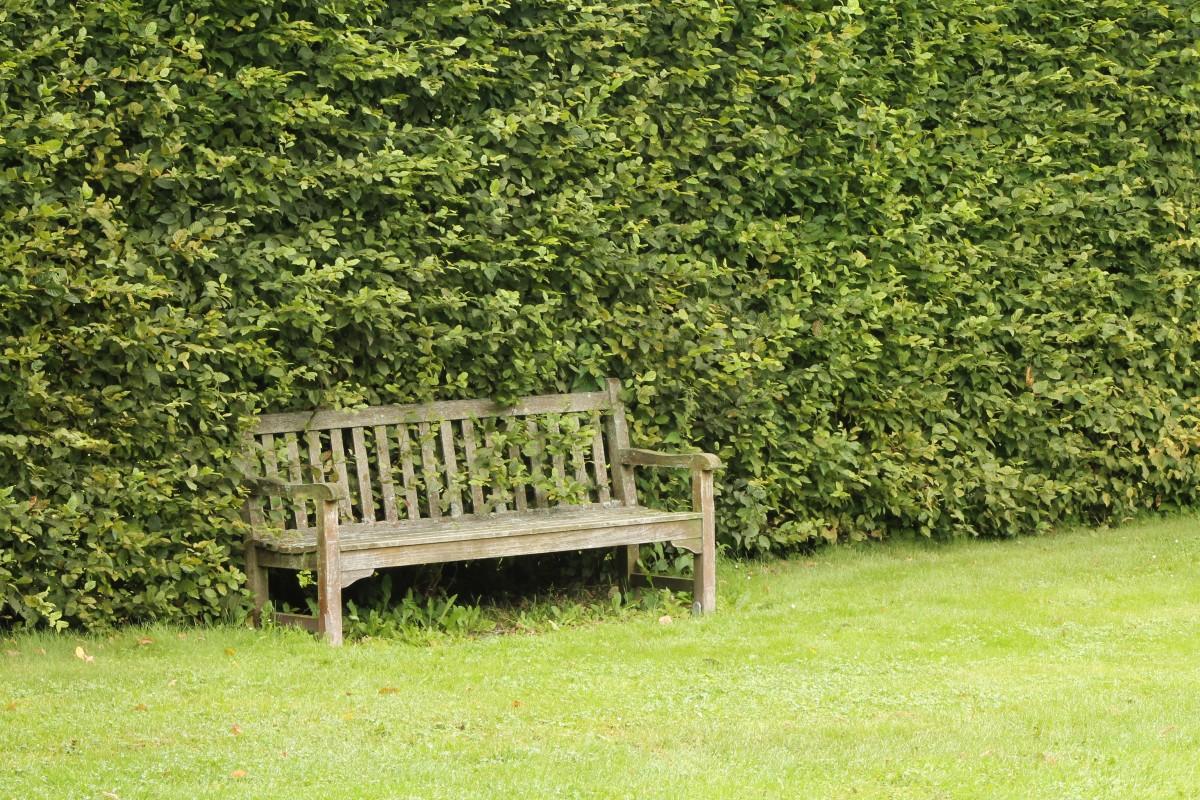 kostenlose foto baum natur gras draussen bank rasen. Black Bedroom Furniture Sets. Home Design Ideas