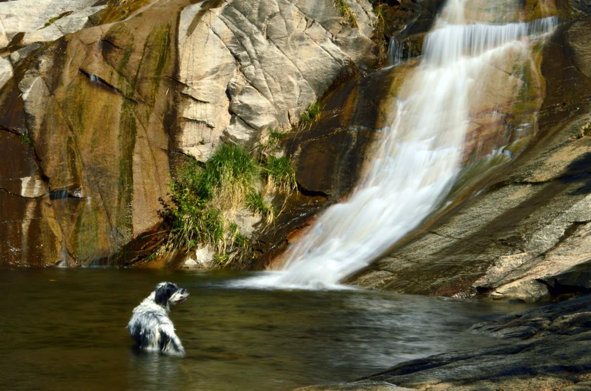 free images : summer, stream, reflection, beak, yellow, fauna