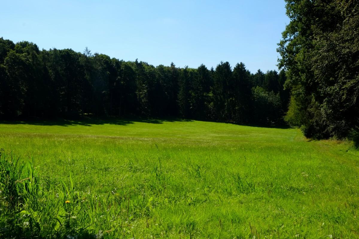 Free Images   Landscape  Nature  Forest  Blossom