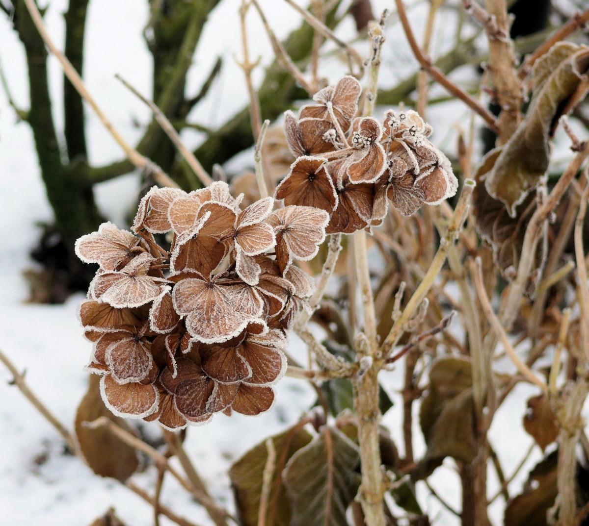 images gratuites arbre branche hiver plante feuille fleur gel la glace printemps l. Black Bedroom Furniture Sets. Home Design Ideas