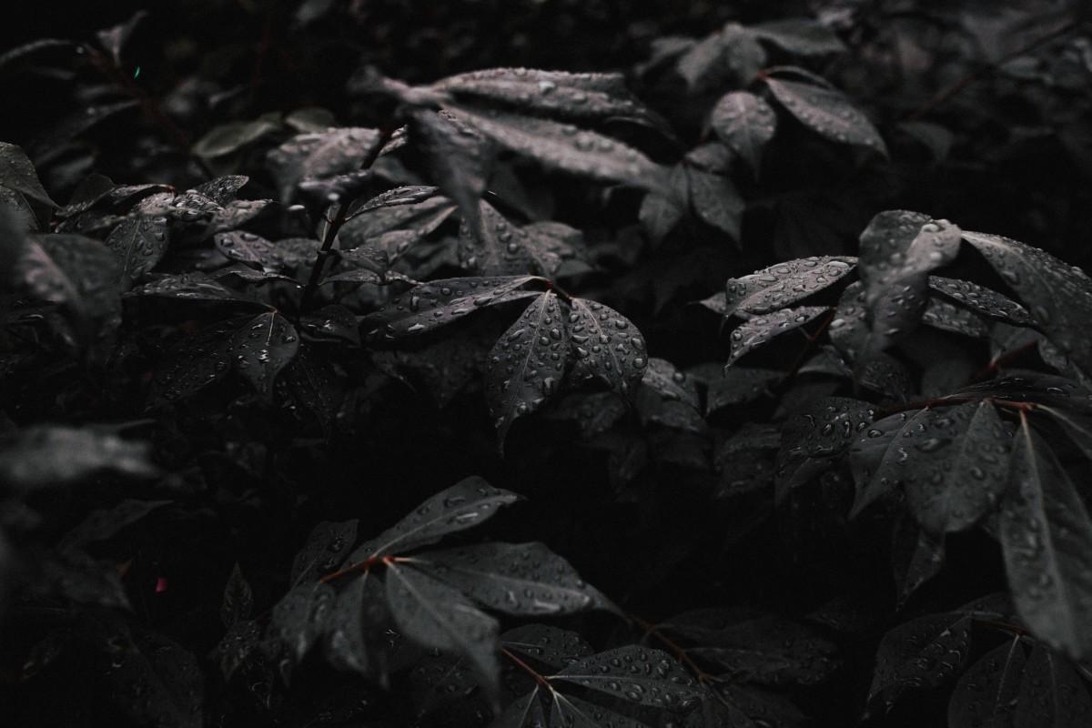 черные листья картинки самостоятельно