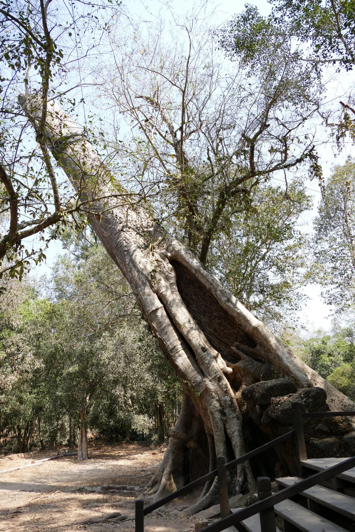 Images gratuites arbre branche plante bois fleur - Plante jungle ...