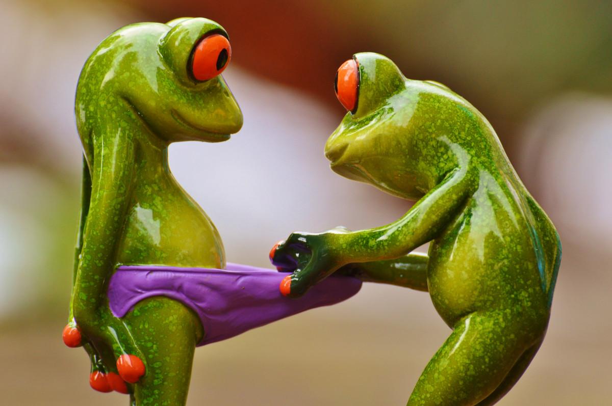 картинки поцеловала жабу хотела сохранить семью