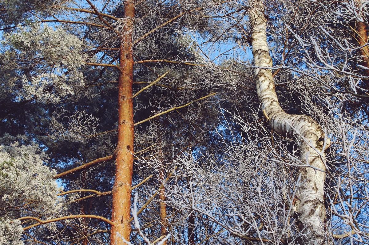 images gratuites arbre la nature branche du froid hiver noir et blanc gel tronc b che. Black Bedroom Furniture Sets. Home Design Ideas
