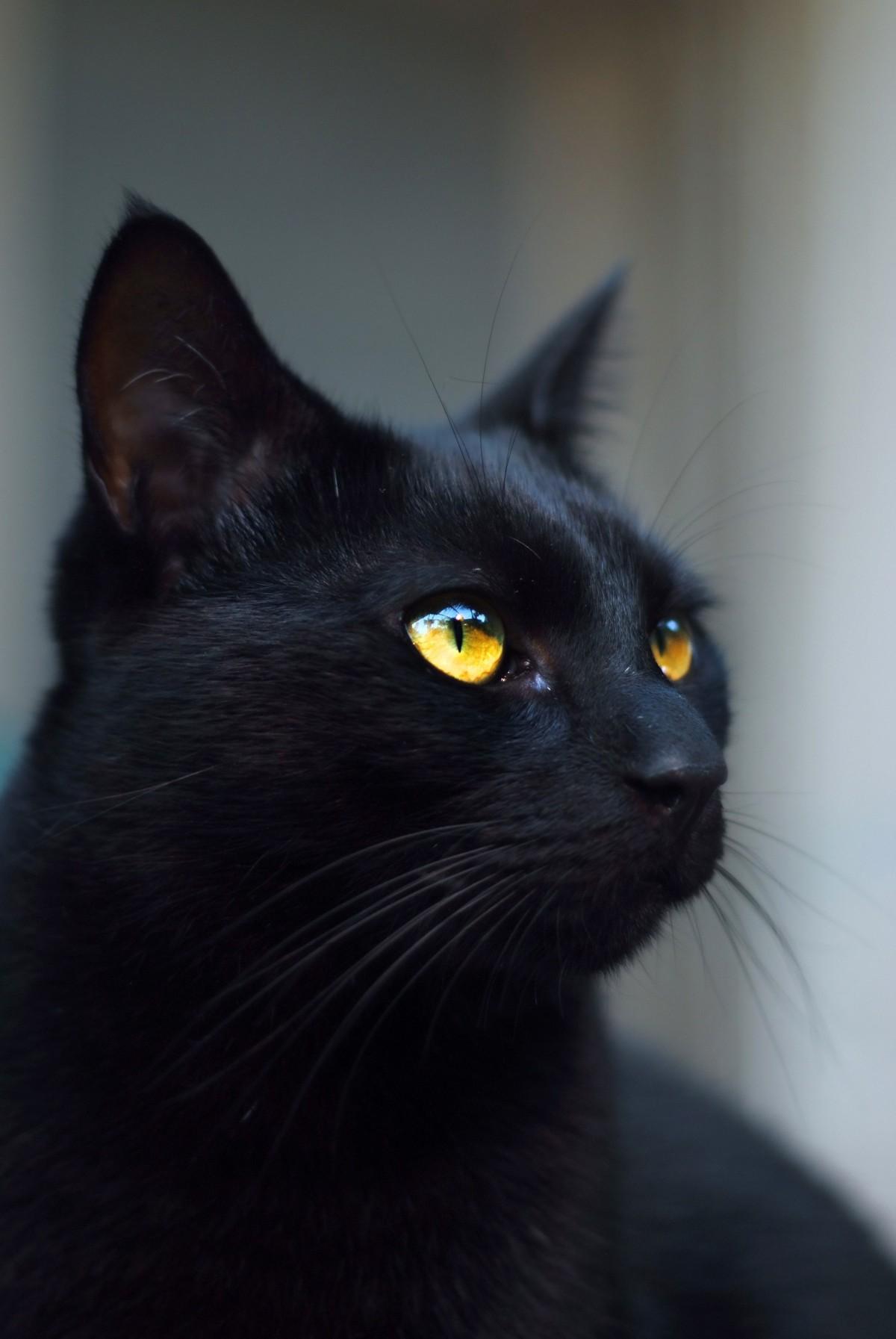 Black Cat Nude Photos 59
