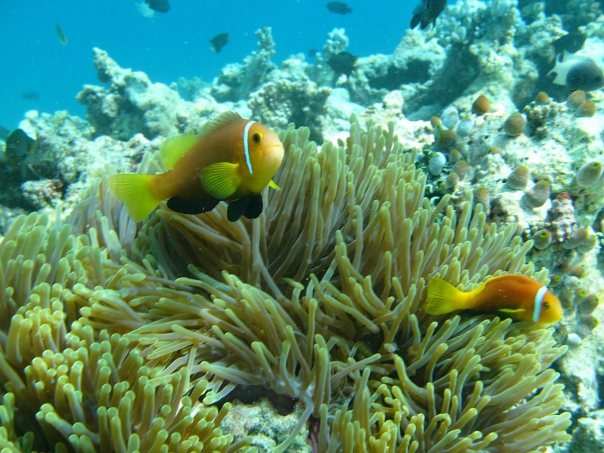 kostenlose foto  wasser ozean unterwasser biologie