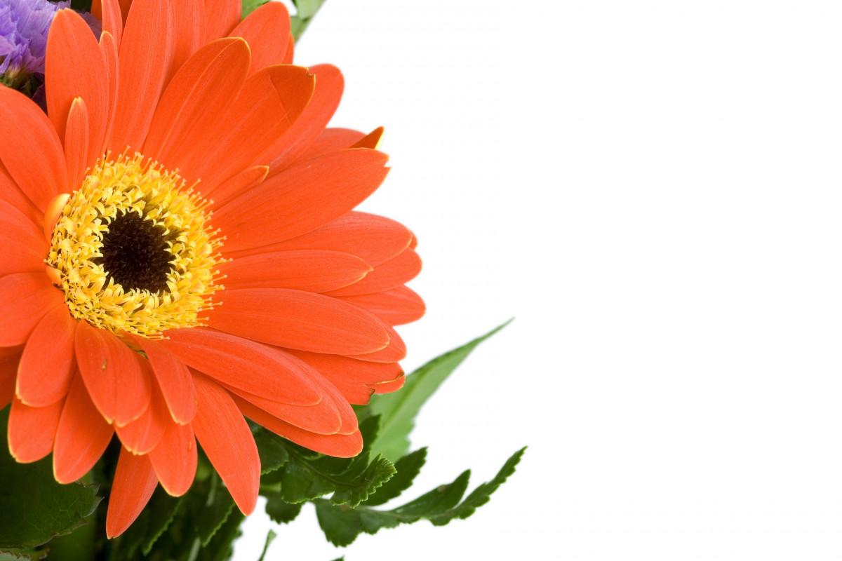 Fotos gratis flor p talo florecer polen primavera - Cortar hierba alta ...