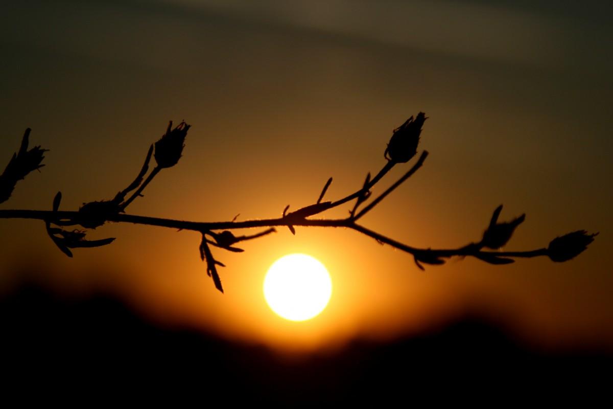 Free Images Branch Silhouette Light Sun Sunrise