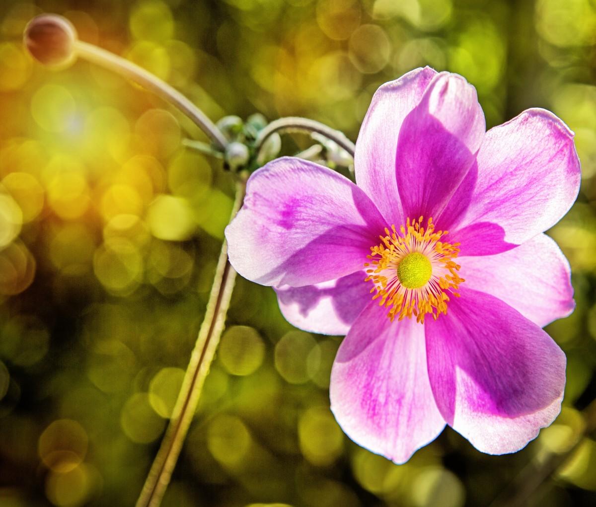 Цветы с бархатными лепестками