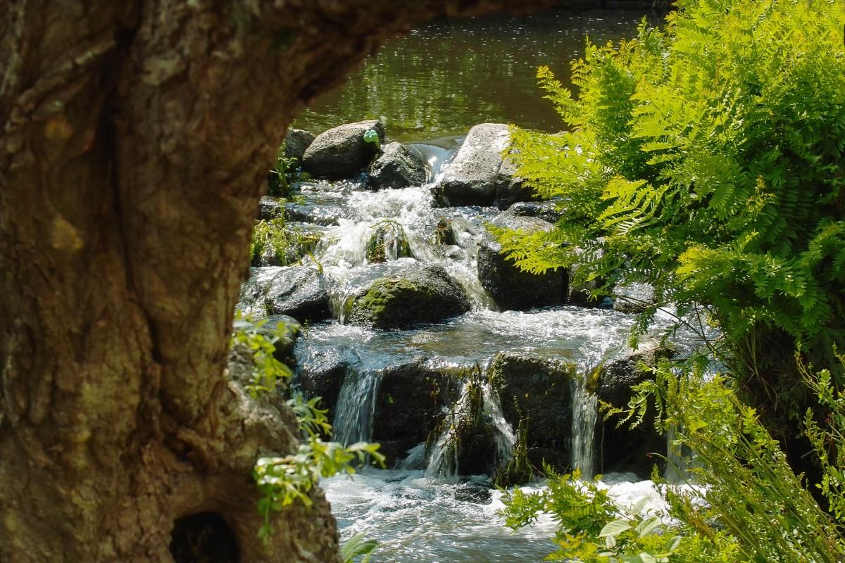 Images gratuites paysage arbre eau la nature for t for Cascade d eau jardin