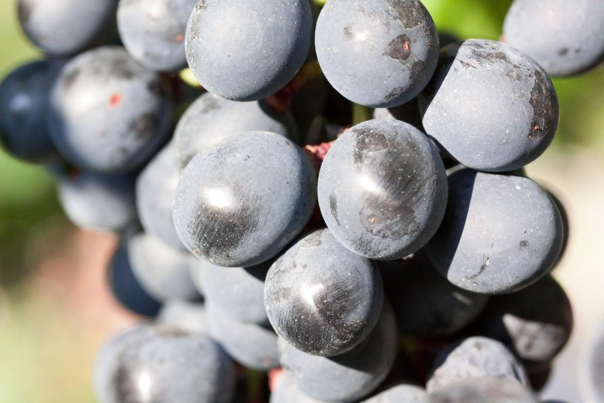 Sininen Viini