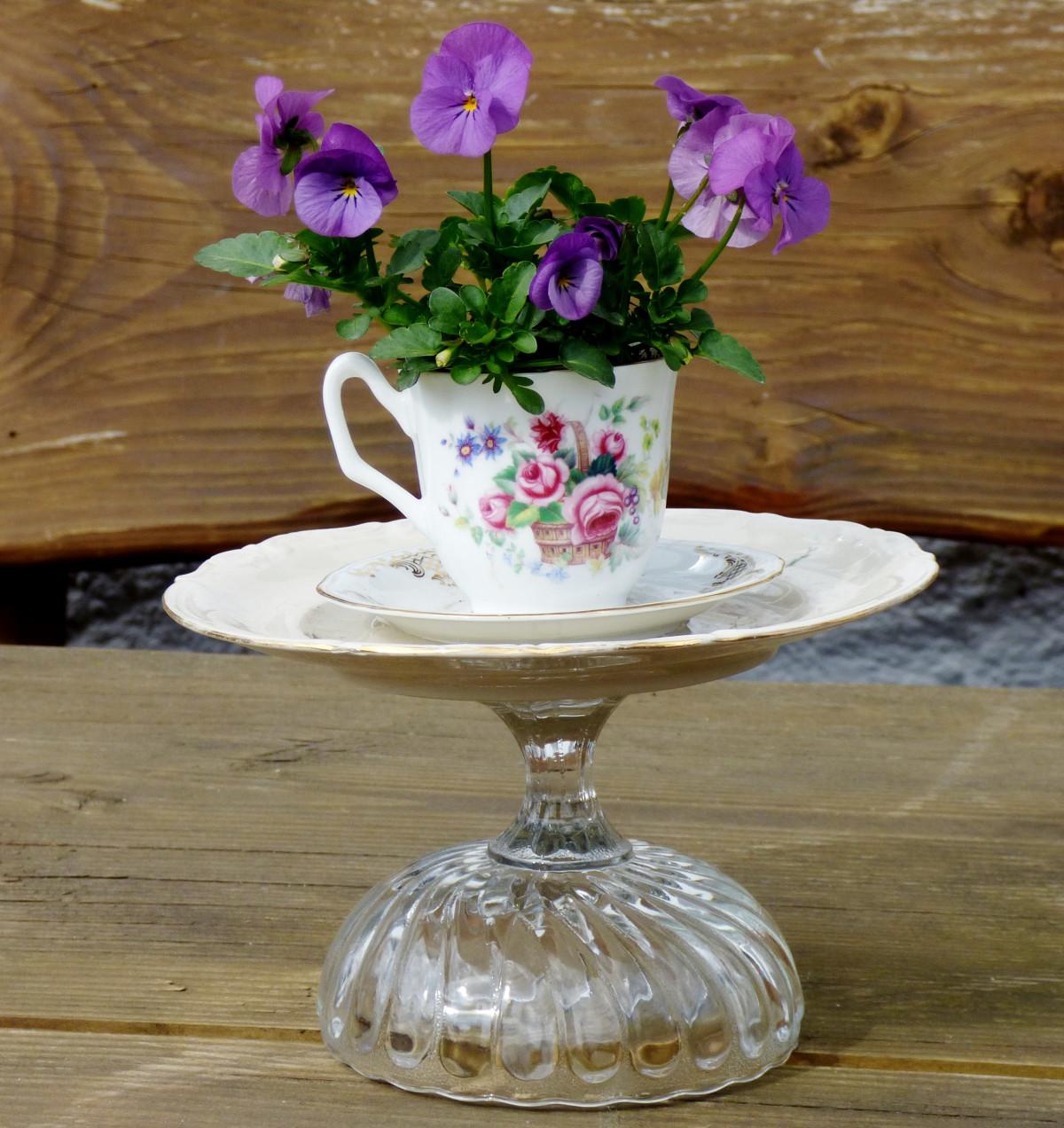 Images gratuites table plante fleur violet verre - Table plante ...