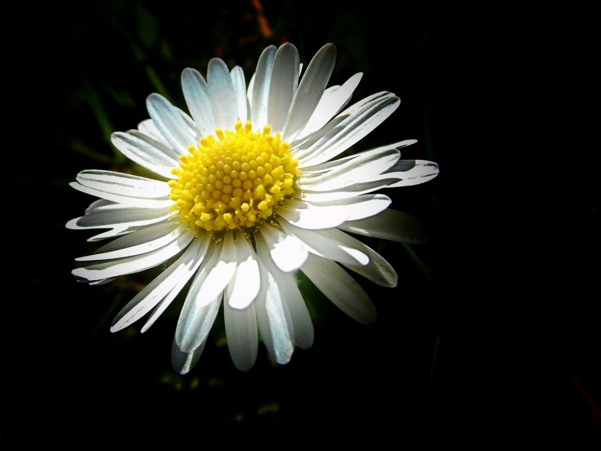Looking For Alaska Daisy: Immagini Belle : Natura, Bianco E Nero, Petalo, Nuotare