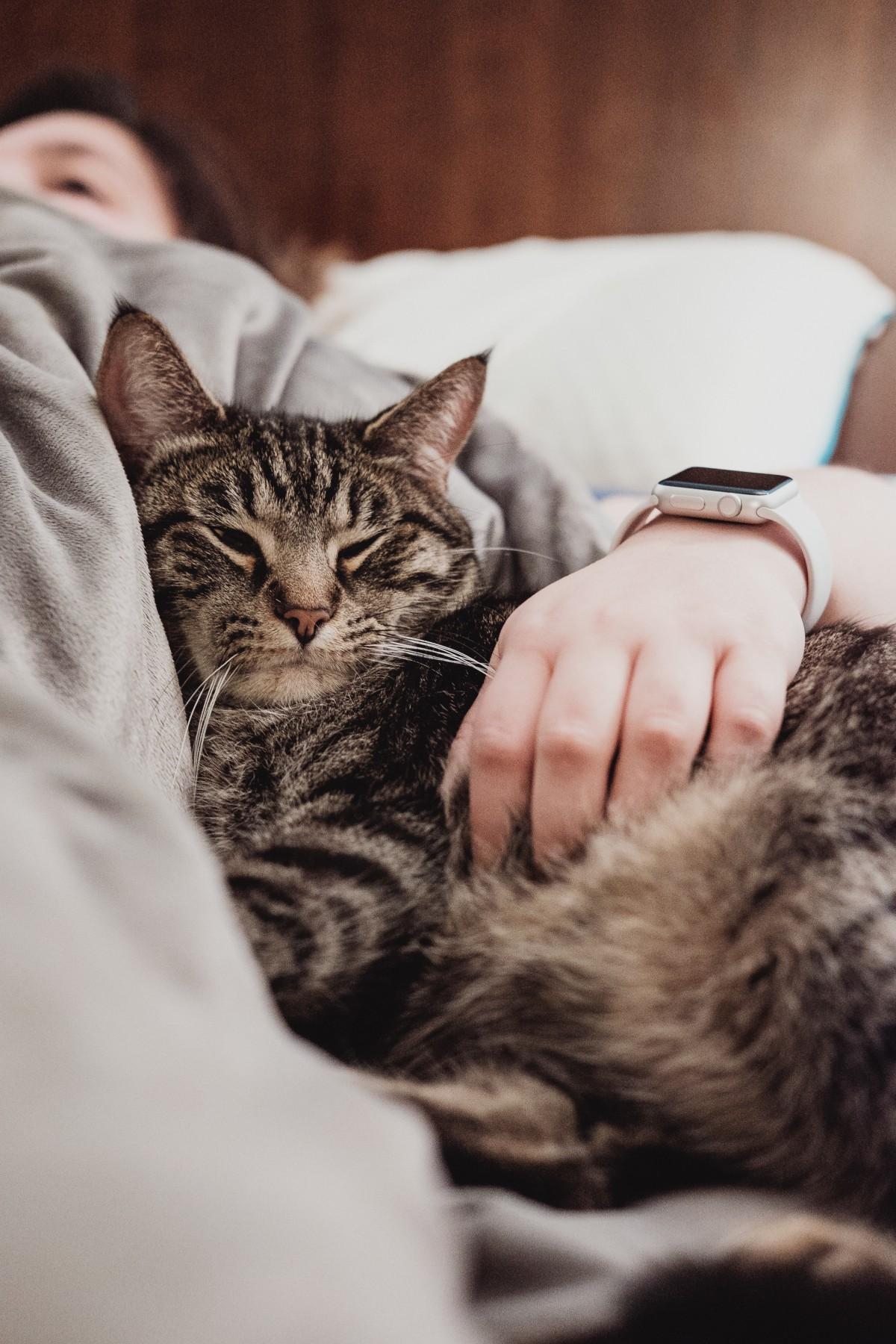 veľké mäkké mačička