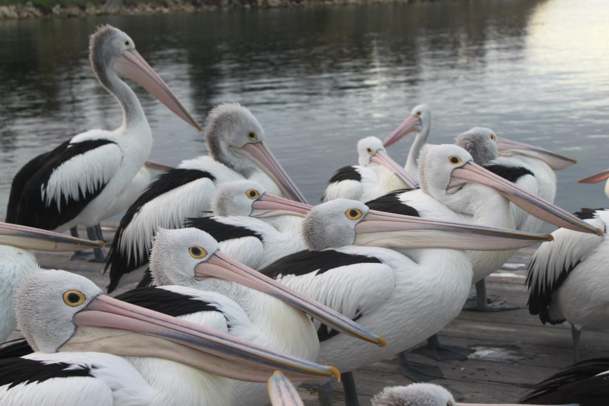 Животные и птицы австралии картинки с названиями юных лет
