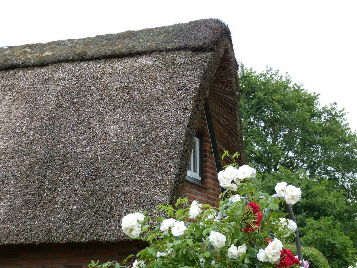 Gratis afbeeldingen : bloem gebouw huis riet dorp huisje