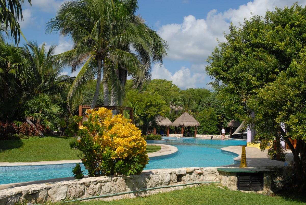 free images tree villa home vacation swimming pool backyard