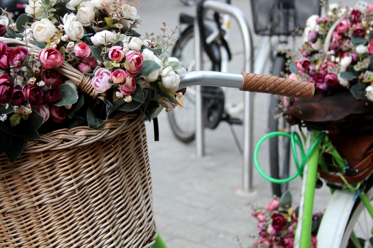 images gratuites plante roue fleur v lo bicyclette printemps couleur rose rose. Black Bedroom Furniture Sets. Home Design Ideas