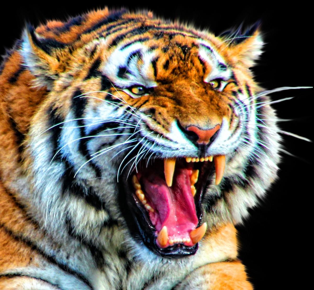 8k Animal Wallpaper Download: Free Images : Nature, White, Animal, Wildlife, Wild, Fur