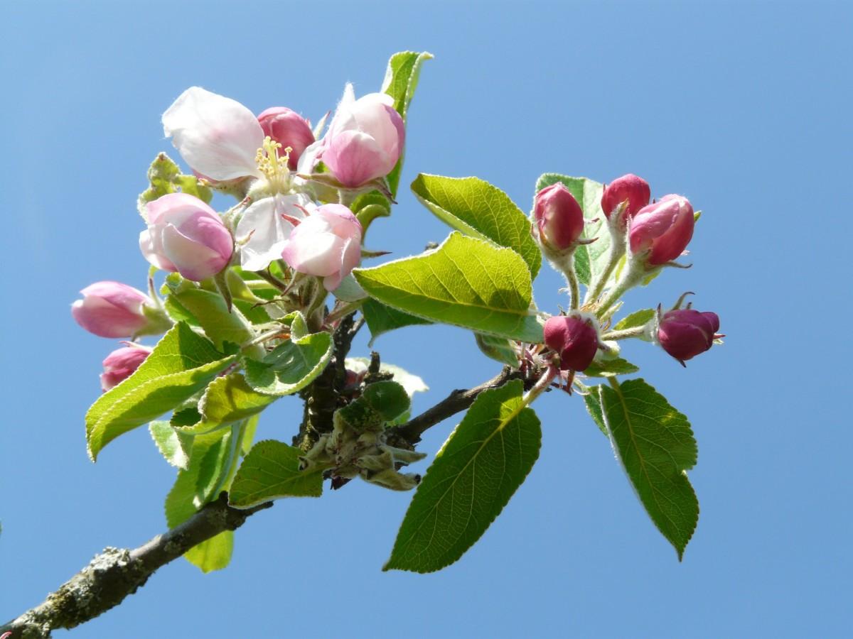 Что посадить на 6 сотках: деревья, растения, кустарники и цветы 53