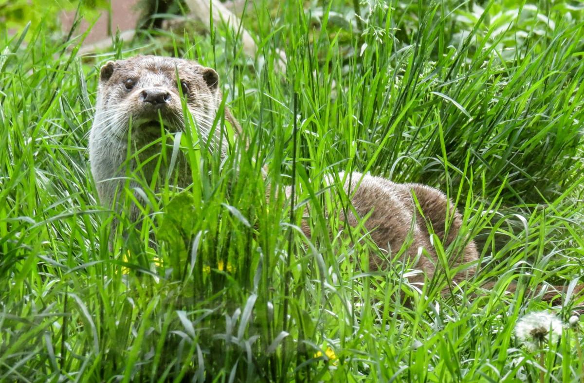 Bakgrundsbilder : vatten, gräs, äng, vilda djur och växter, vild ...
