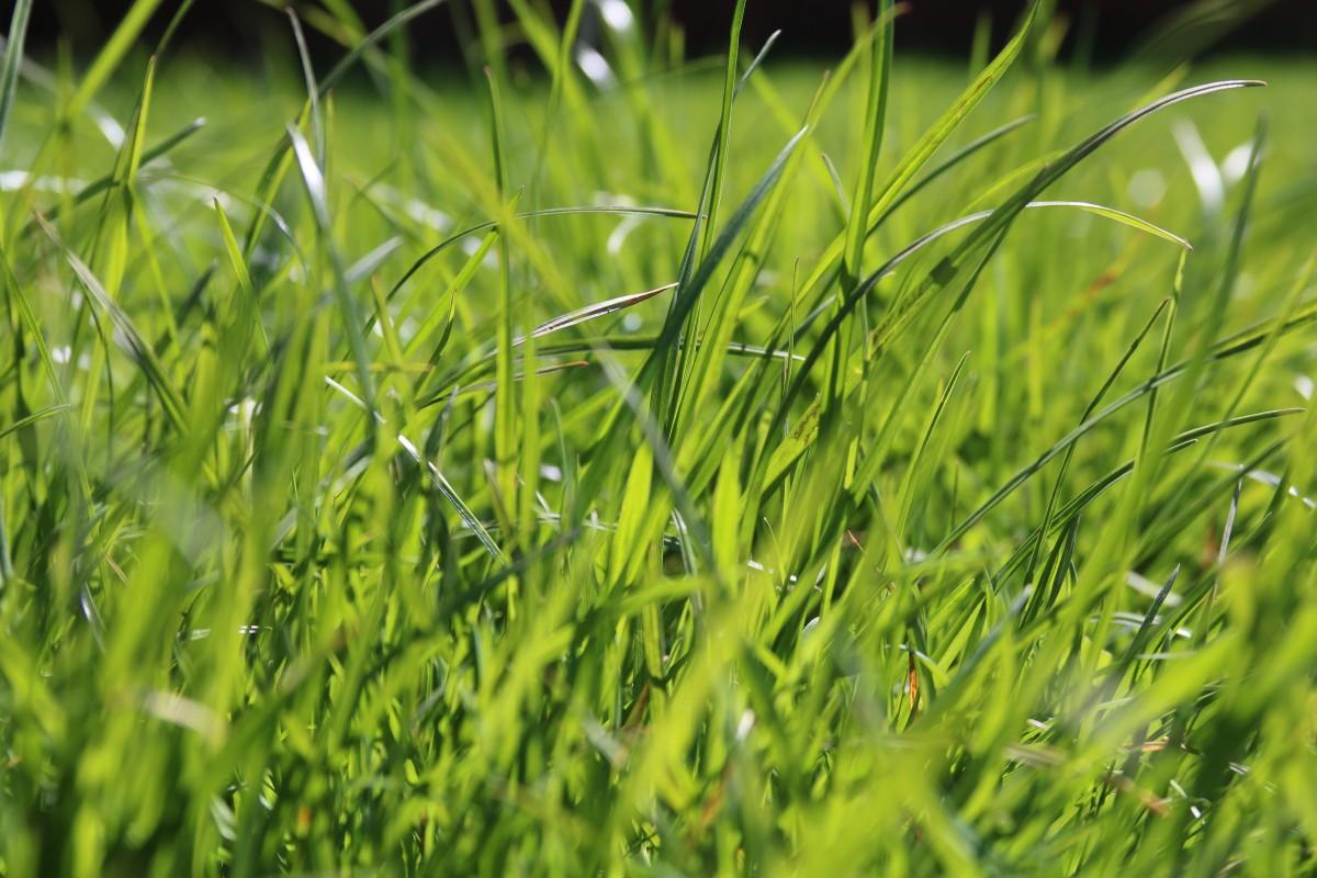 Images gratuites eau la nature herbe plante champ for Plante herbe haute