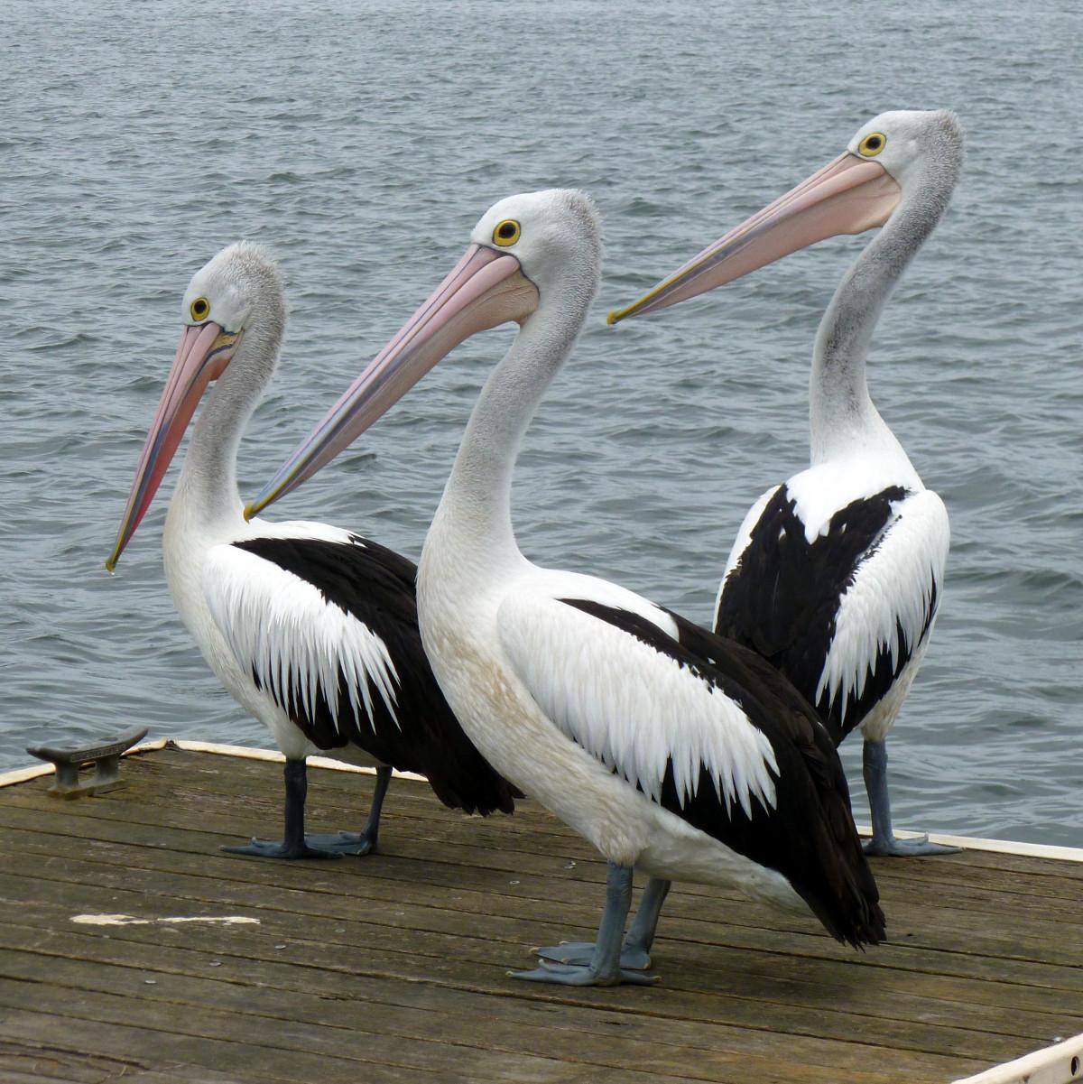 Long Island Wild Birds