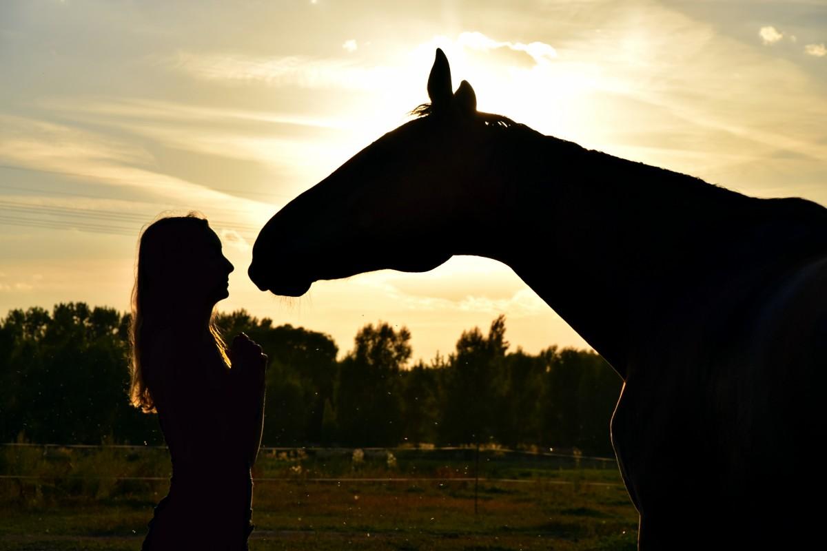обзор женщина лошадь как завоевывать принято