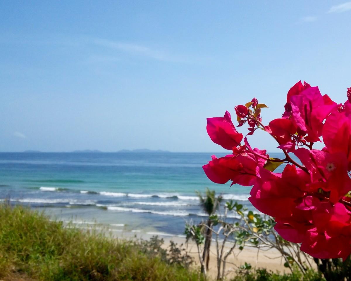 или открытки цветы на берегу океана гарсии увеличенные тысячи