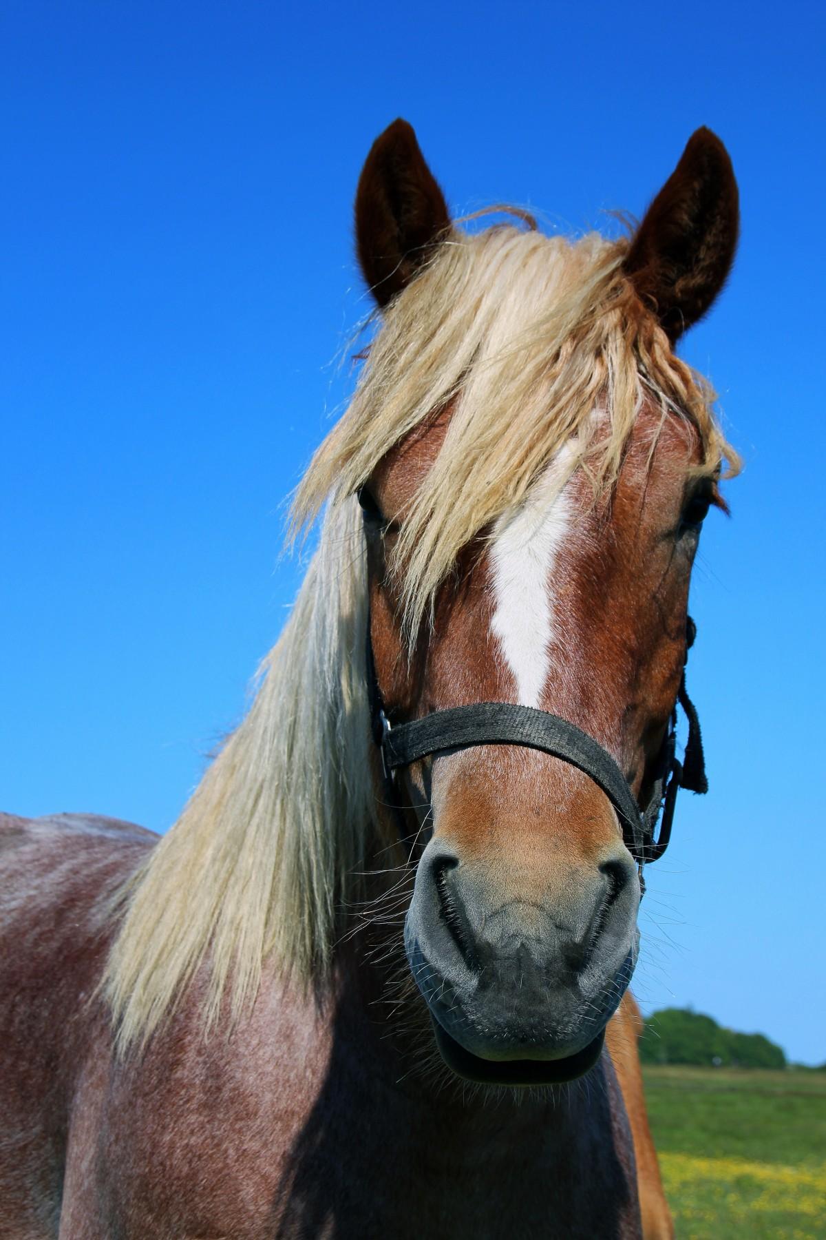 matériel de clôture pour chevaux