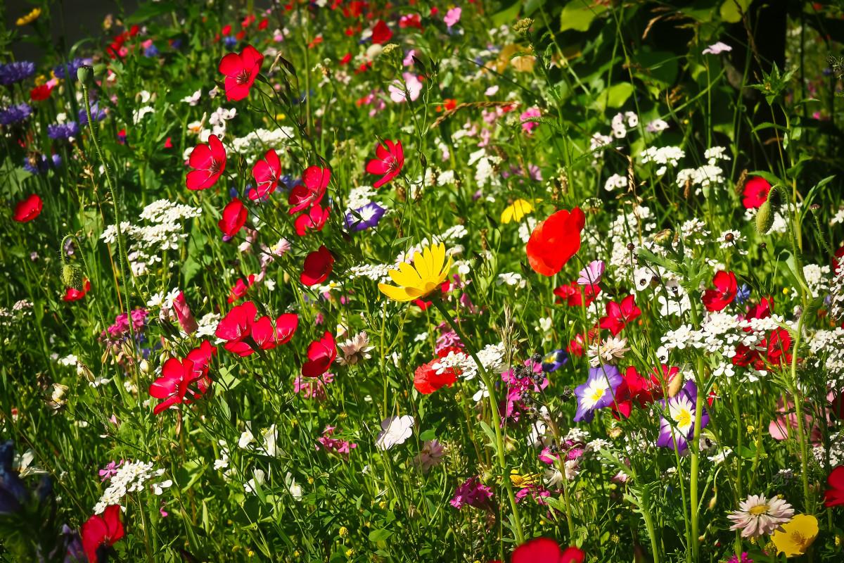 Картинка яркие цветы на лугу