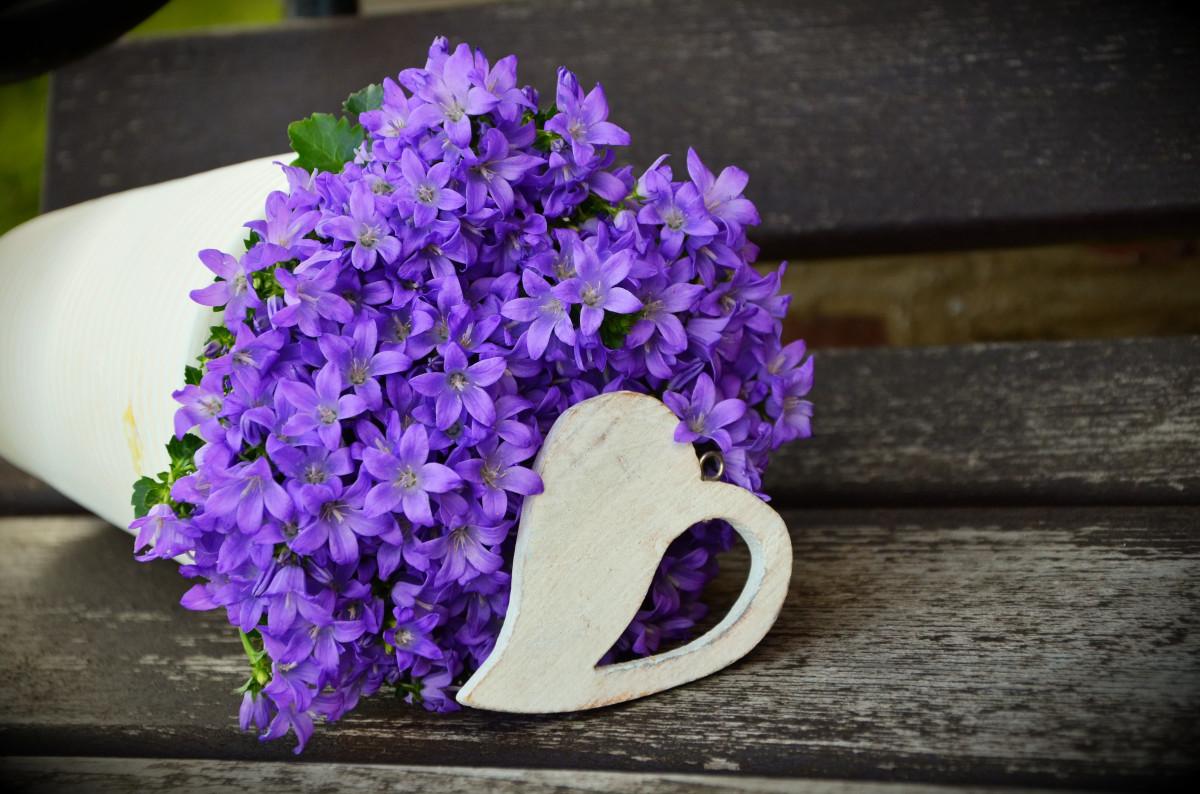 kasvi kukka violetti terälehti sydän romanttinen sininen Kiitos kukat järjestely kukka tervehdys violetti liila kukkaruukku elin onnittelukortti kevätkukan makrokuvaus kukka violetti Ystävänpäivä äitien päivä kukkapaketti