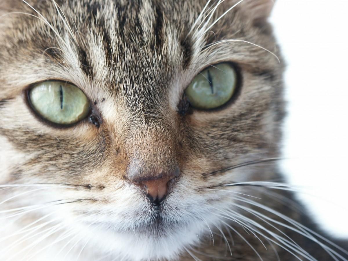 jouet chaton